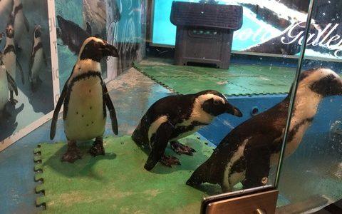 【池袋】マジでかわいい!池袋にある「ペンギンのいるBAR」に行ってきました!【東京】