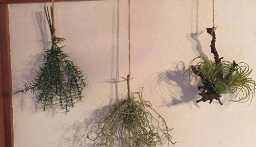 【インテリア】和室に「いなざうるす屋」のフェイクグリーンを吊るしてみた。【植物】